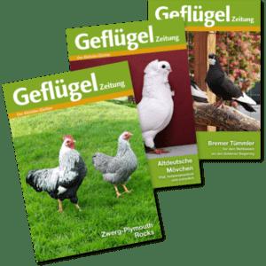 Das Testabo der Geflügelzeitung