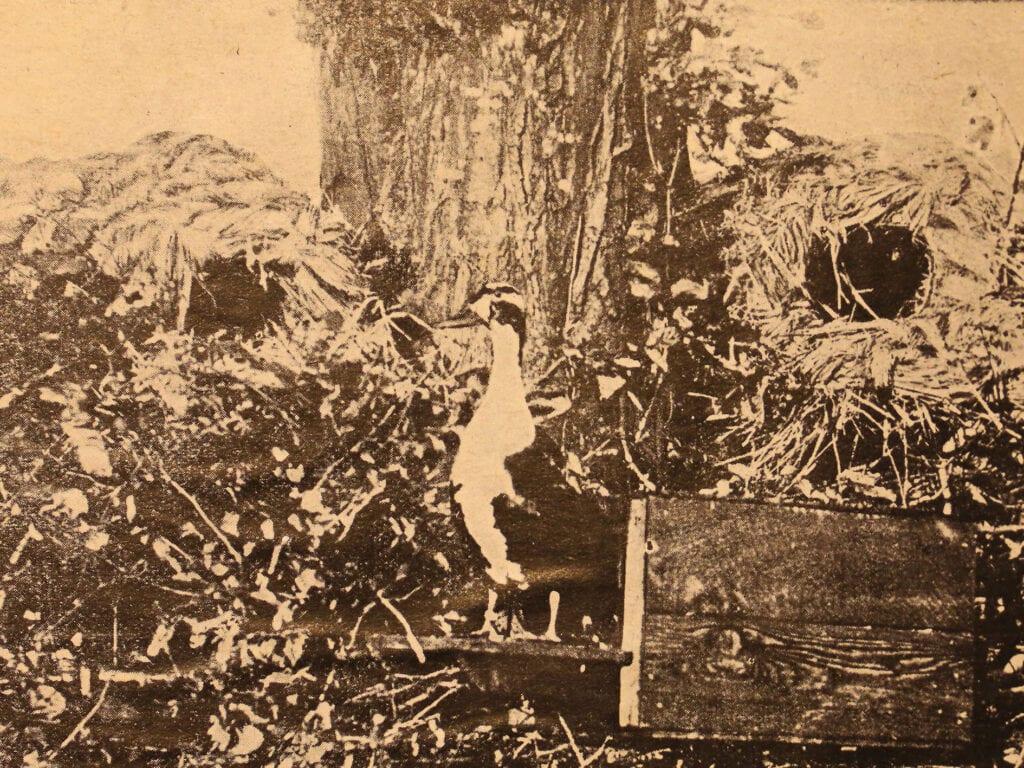Typisches Nest um 1915