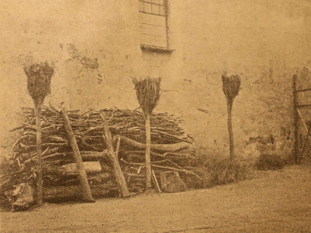 Nistgelegenheiten für Hochbrutflugenten um 1915